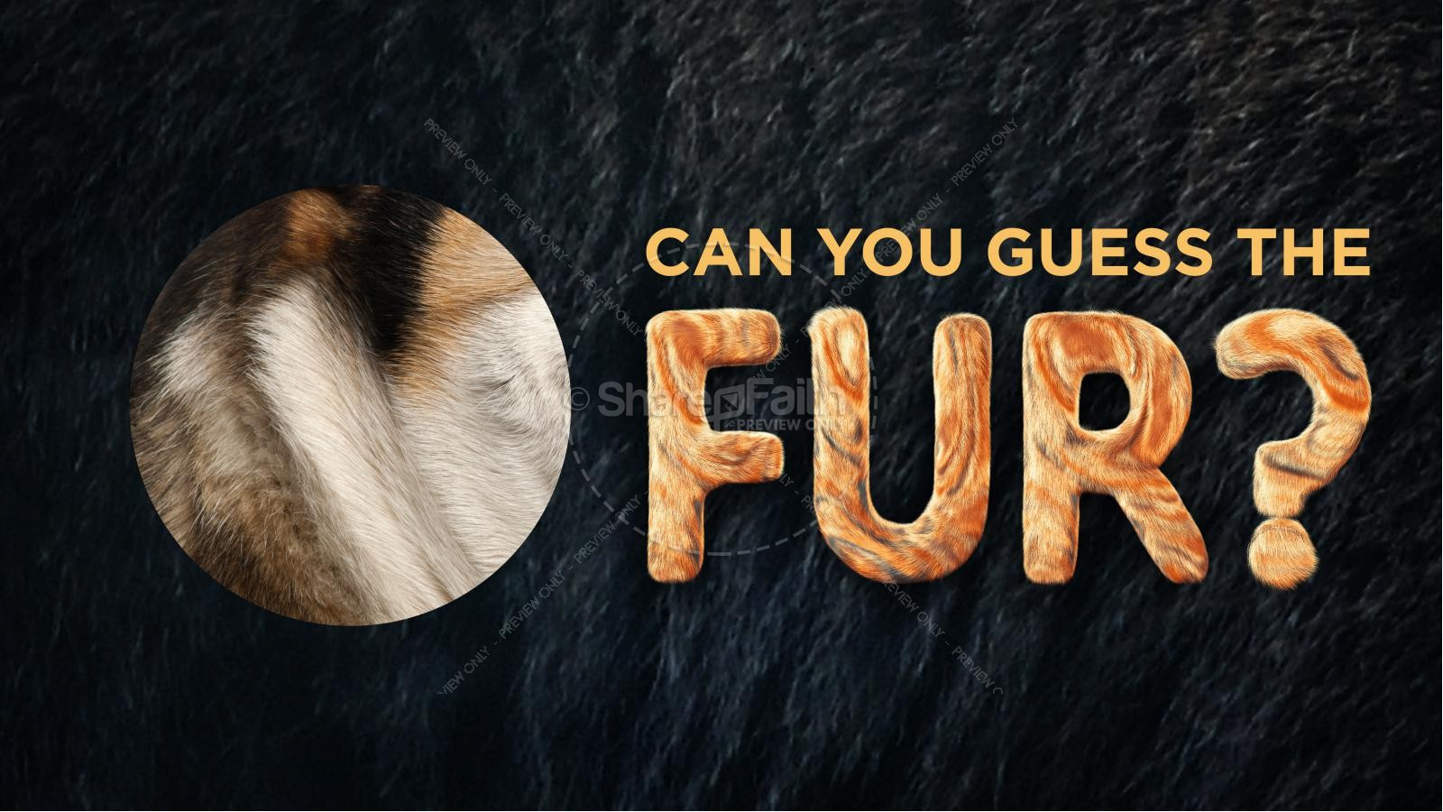Wonder Fur PowerPoint Game