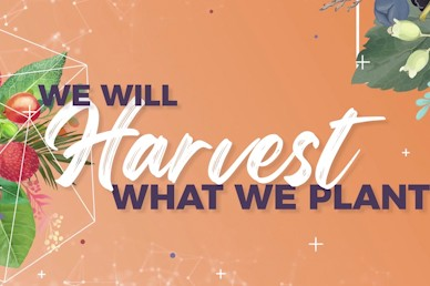 Produce: We Will Harvest What We Plant