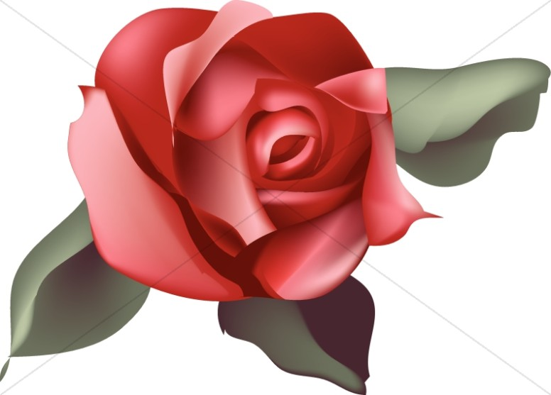 Single Red Rose Blossom
