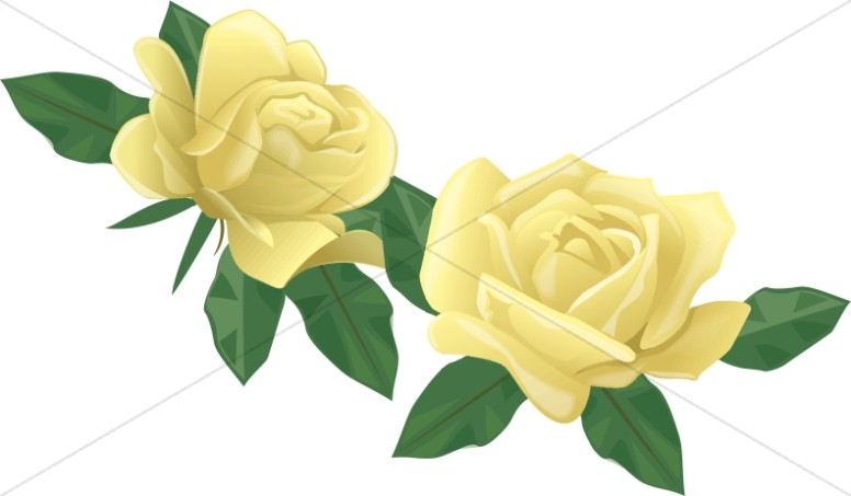 Two Yellow Rose Blossoms