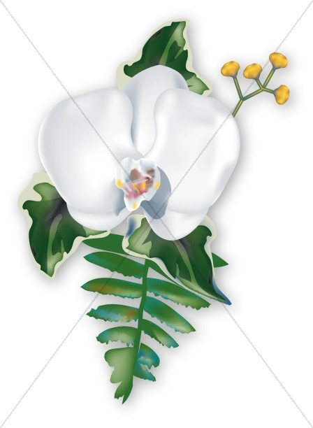 Orchid Corsage for Summer Celebration