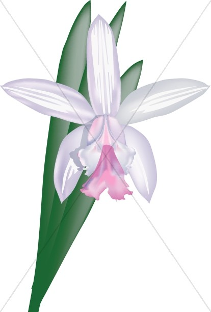 Cattleya Orchid Decoration