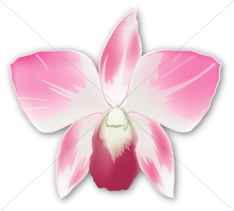 Single Pink Orchid Corsage