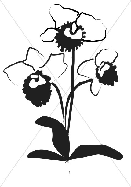 Orchid Decoration in Black Ink