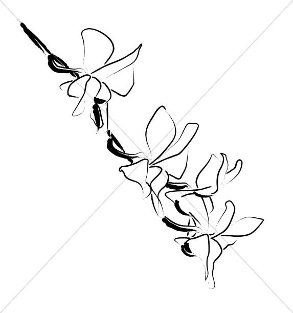 Orchid Blossoms Climb Down a Vine