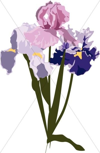Spring Irises