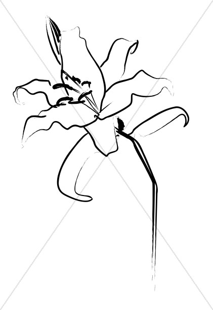 Lovely Lily Line Art