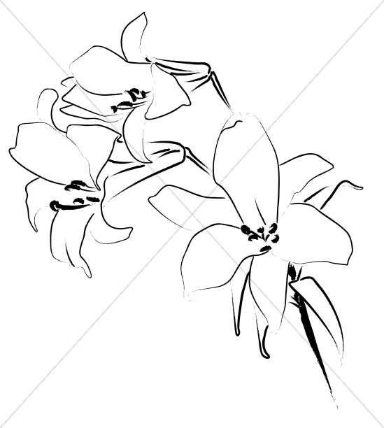 Trio of Lily Flowers Line Art