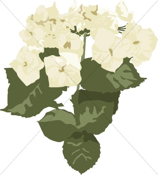 White Hydrangea Altar Flowers
