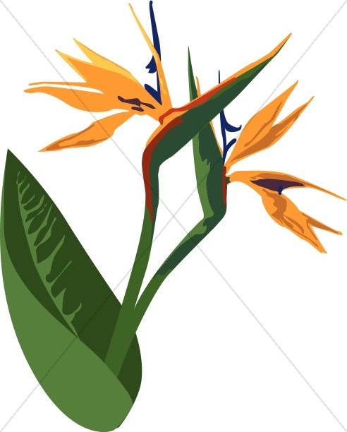 Birds of Paradise Celebration Flower