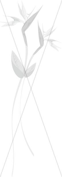 Wispy Sketch of Birds of Paradise