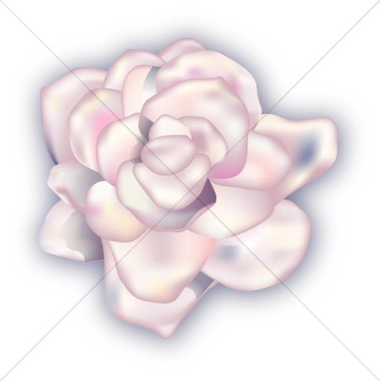 White Gardenia Corsage