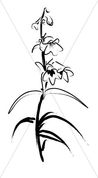 Sketch of Penstemon Stalk
