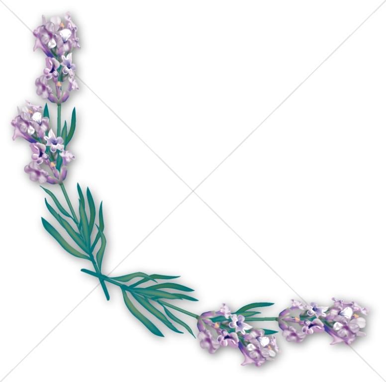 Spring Lilac Corner
