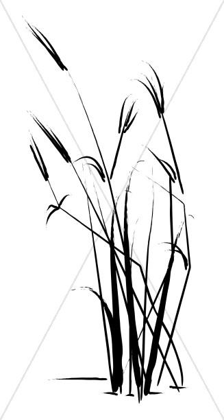 Summer Grass Sketch