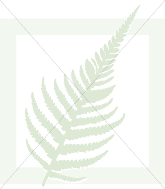Fern in Green Box