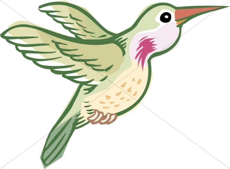 Green Hummingbird