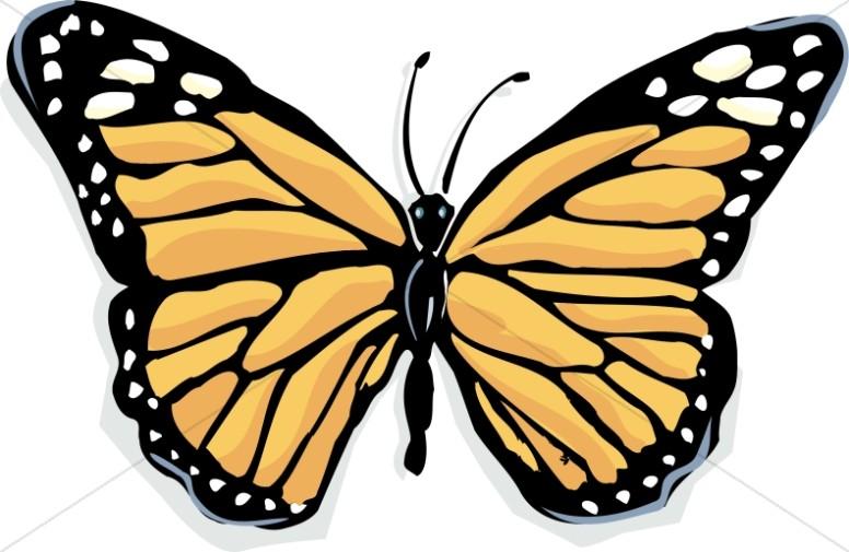 Light Orange Monarch Butterfly