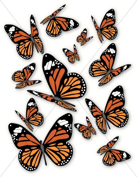 A bunch of Monarch Butterflies
