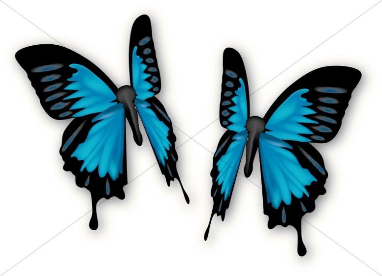 Pair of Blue Butterflies