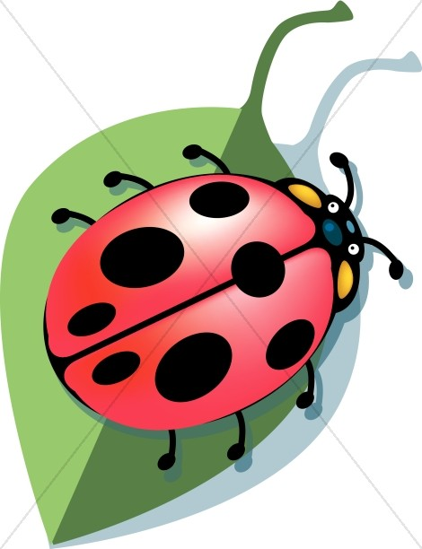 Our Lady Bug