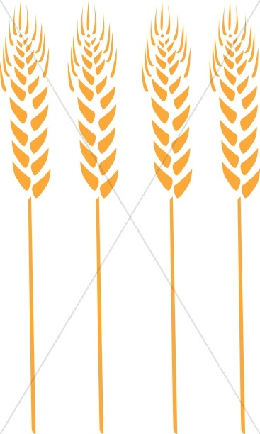 Four Wheat Stalks