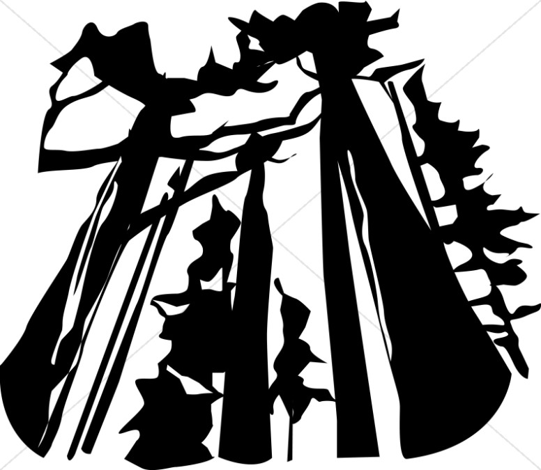 Tall Trees silhouette