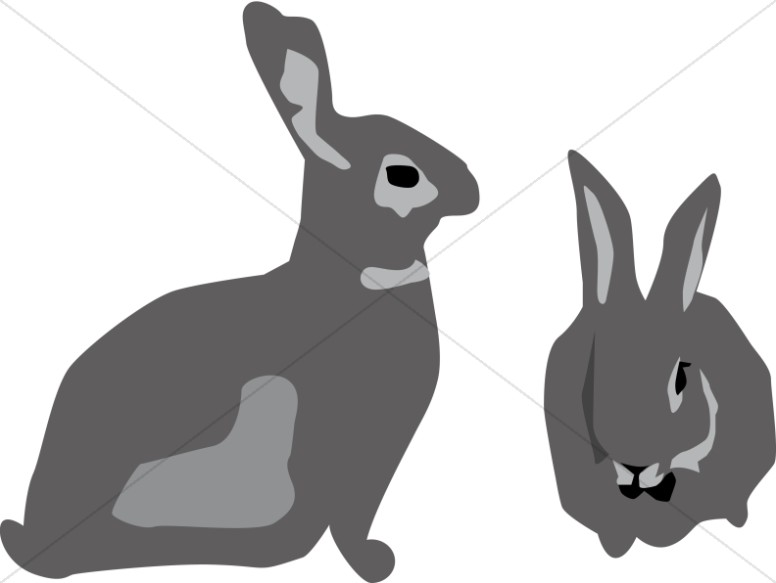 Two Gray Bunny Rabbits