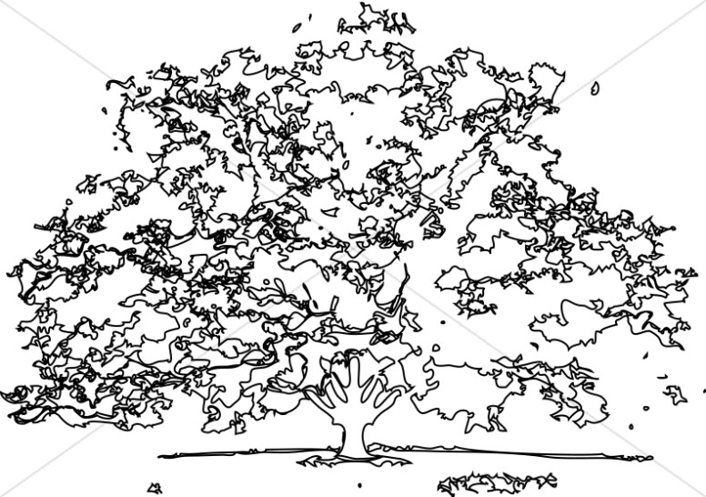 Black and White outline Maple Tree