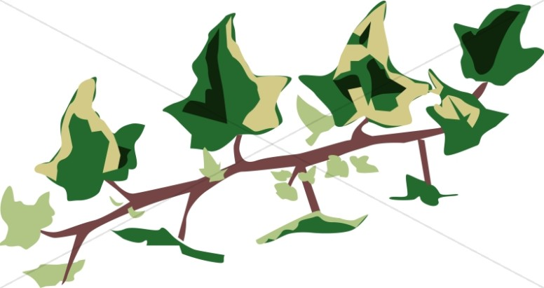 Variegated Ivy Branch