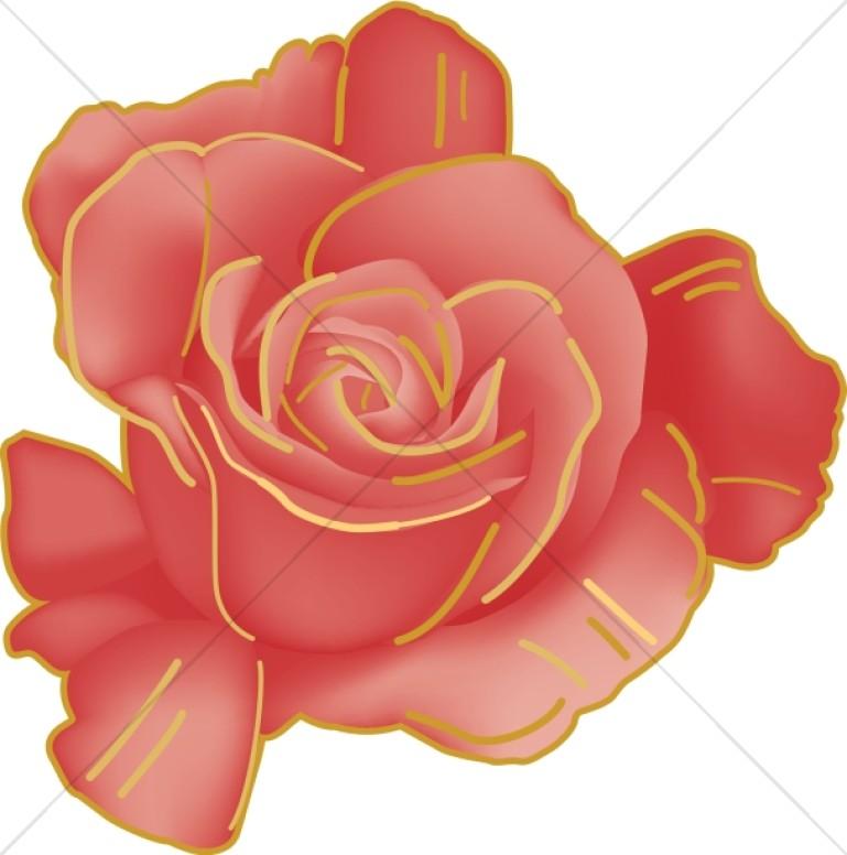 Rose Beginning to Open